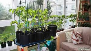apartment gardening. Plain Gardening Indoor Gardens For Small Apartments  Suspended And Container Gardening   YouTube In Apartment F