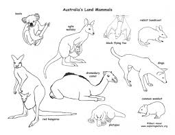 Small Picture Platypus Coloring Australian Animal Coloring Pages Mammals with