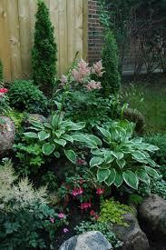 shade garden plants astilbes hostas fuchsias creeping jenny