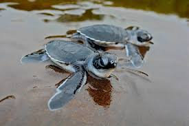 """Tag Archive For """"sea Turtles"""" 