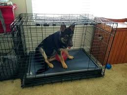 airline approved dog crates for contemporary crate bedding set customer reviews airplane crib target bed