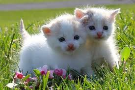 cute kittens playing wallpaper. Fine Playing Seems Like Twin Cats Four Beautiful Kittens Playing Throughout Cute Kittens Playing Wallpaper