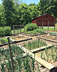 there are a lot of reasons for raised bed gardening there are also some great reasons not to use raised beds the choice is a personal one that will be