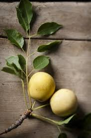 Amarula – Made from African Marula Fruit
