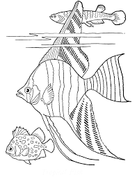 Free Printable Adult Coloring Page Tropical Fish The Graphics Fairy