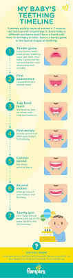 Your Babys Teething Timeline Baby Teething Chart New
