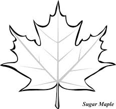 Small Picture Maple Leaf Sugar Maple Leaf Picture Coloring Page Tattoo ref