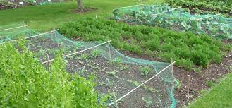 how to start a new garden bed removing
