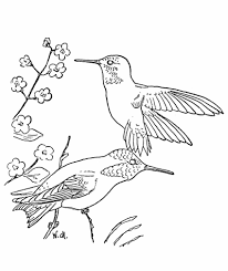 Small Picture Best Realistic Hummingbird Coloring Pages Womanmatecom