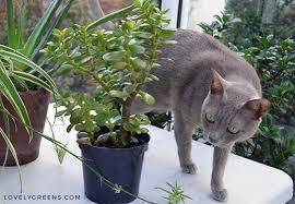 5 common houseplants that are toxic to