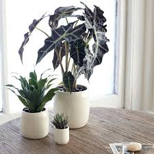 modern office plants. The Sill\u0027s \ Modern Office Plants Pinterest