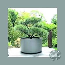 extra large planters for trees plant pots outdoor uk containers