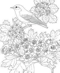 Bluebird Coloring Page More Kids Fun Eastern Bluebird Coloring Page
