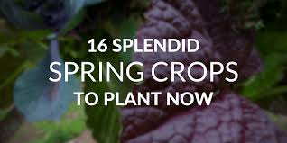 16 crops that thrive in cool spring weather
