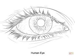 Small Picture Eye Coloring ActivityColoringPrintable Coloring Pages Free Download