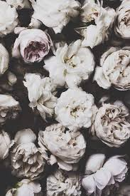 tumblr background black and white flowers. Black And White Hipster Tumblr Backgrounds Google Search For Background Flowers