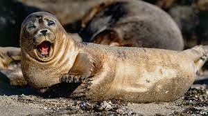 Image result for seal
