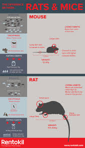 Pest Dropping Identification Chart What Is The Difference Between A Rat And A Mouse Rentokil