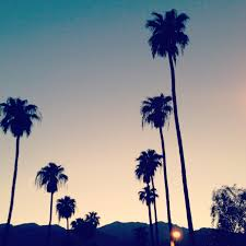 Modern Palm Trees Tumblr Vintage California Photography Treessummer U On Perfect Ideas