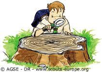 """Résultat de recherche d'images pour """"gif tronc d'arbre"""""""