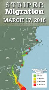 Striper Migration Map Map March Bass Fishing