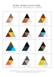 Bird Identification Colour Triangle Chart
