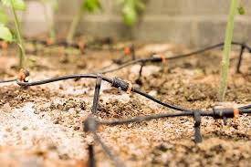 a black and orange plastic and rubber drip irrigation system in brown garden soil with