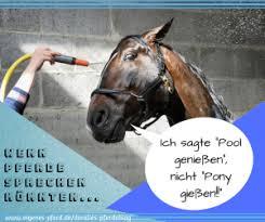 Pferdesprüche Und Reitersprüche Für Jede Gelegenheit Dein Eigenes