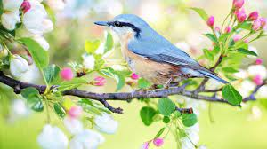 """Peaceful music, Relaxing music, Instrumental music """"Birds of Spring"""" by Tim  Janis - YouTube"""