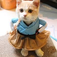 Cat Costumes & Cat Outfits - Shark, Rabbit, Tuxedo, Peacock, & More!