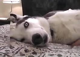 Husky Videos / Anal Zoofilia / Most popular Page 1