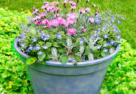 Small Picture 12 Container Garden Combos
