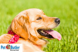Allergy Season: Symptoms and Treatment for Allergies in Dogs!