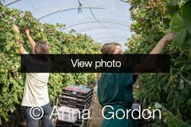 Dorian and Iva. Hall Hunter Partnership. Berry Nursery in Chichester -  Editorial - Portfolio - Anna Gordon