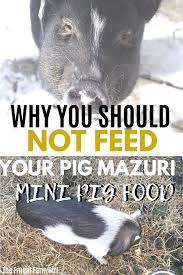 Mazuri Mini Pig Feeding Chart Mini Pig Feeding Tips To Start Now The Frugal Farm Girl