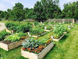 community gardening. Community Garden Gardening Y