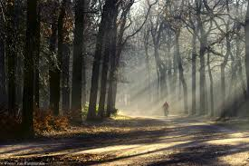 Wallpaper Sunlight Trees Landscape Fall Nature Bicycle Grass