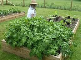 Kitchen Garden Farm Courses Polly Woodskitchen Garden School