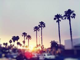 palm trees sunset tumblr. Palm Tree Sunset Tumblr Trees