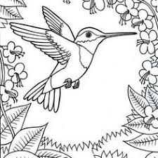 Small Picture hummingbird pictures to print for free hummingbird coloring