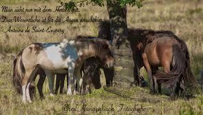 Pferde In Der Wahner Heide Foto Bild Fotos Und Sprüche Pferde