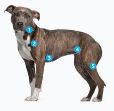 Canine Lymphoma Symptoms Lymphoma In Dogs Diagnosis And Treatment