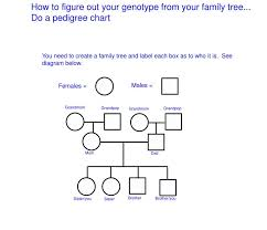 Ppt How To Figure Out Your Genotype From Your Family Tree