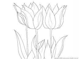 チューリップの下絵春の花のぬりえ
