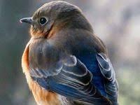 Птички22: лучшие изображения (9) | Hummingbird drawing ...