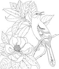 Coloring Pages Birds Realistic Fresh Birds And Flowers Coloring