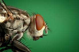 35 ways to get rid of flies keep them away forever