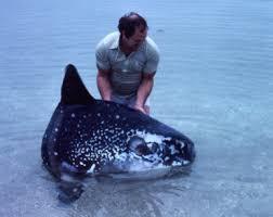Fishy Trivia 3 Spotting Southern Ocean Sunfish Sunfish