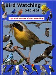 Great Backyard Bird Count Urges People To Birdwatch For Science Backyard Bird Watch