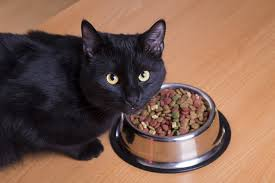 Are These Myths About Healthy Cat Food True Or False Catster